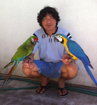 Blue & Gold and Military Macaws