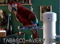 Green Wing Macaw - parrot
